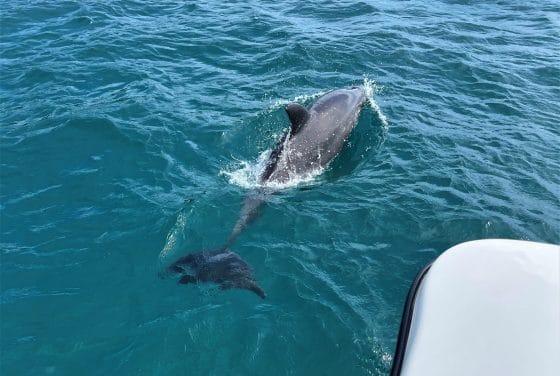 Dolphin Spotting Tour